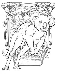 koalaRooImage