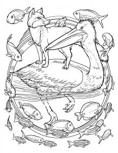 pelicanFoxImage
