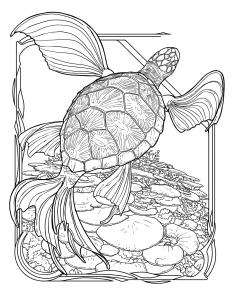 turtleFishImage